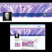 Twitter banner designed for Pathology, Divison of Gastrointestinal and Liver Pathology
