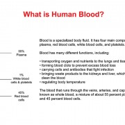 Adobe Illustrator Drawing – Presentation on Human Blood